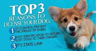 3 reasons to license your dog