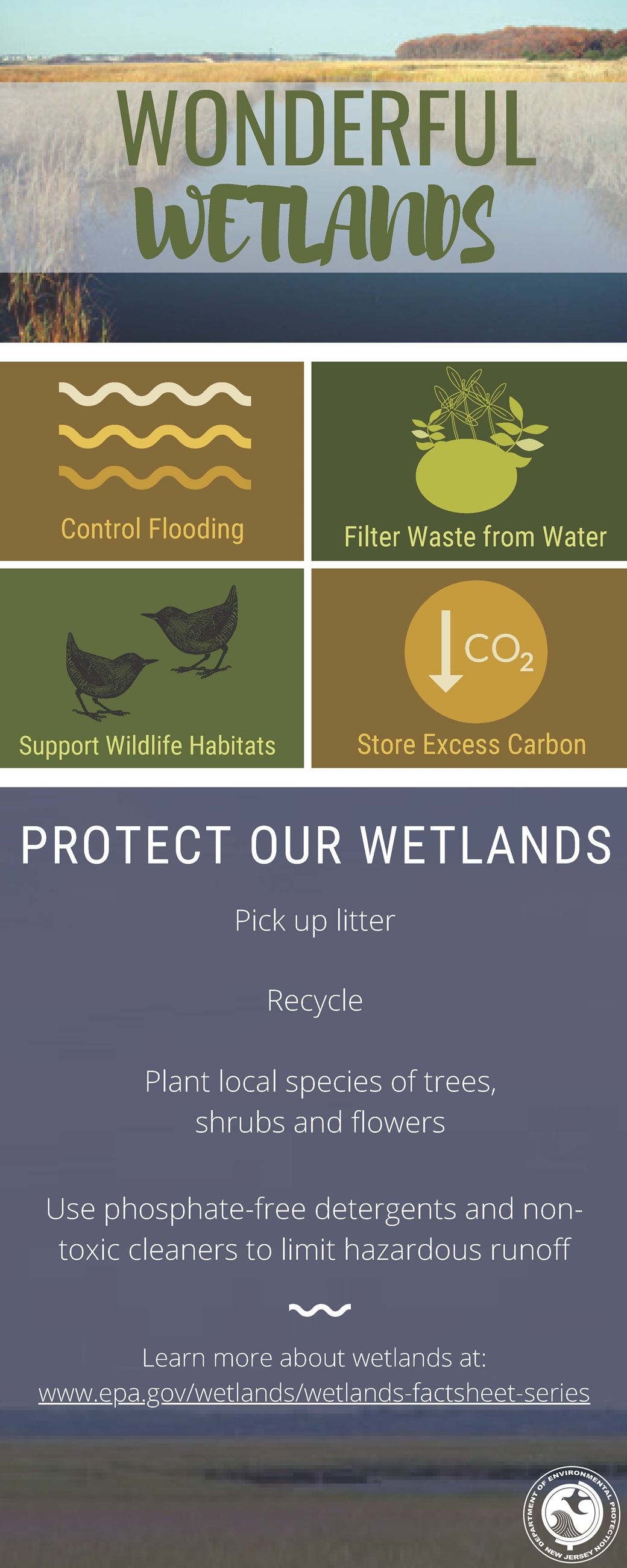 Wonderful Wetlands Infographic
